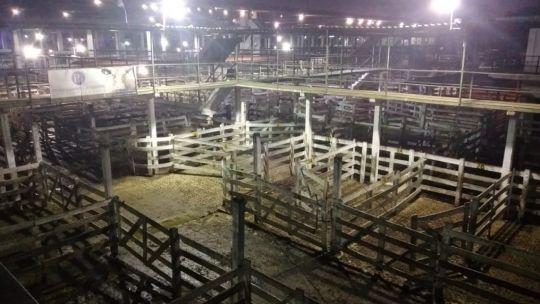 paro-del-campo:-segundo-dia-sin-entrada-de-animales-en-el-mercado-de-liniers